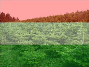 Hazai fenyőfa árlista